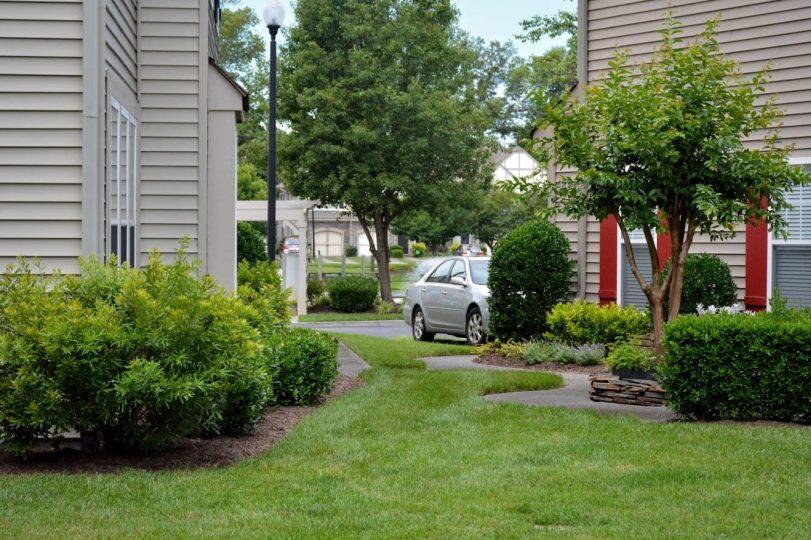 2020-06-15 Green grass from backyard